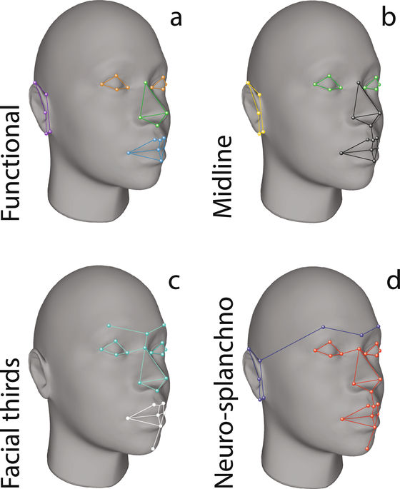 Artículo original de la LCF: Developmental pathways inferred from modularity, morphological integration and fluctuating asymmetry patterns in the human face